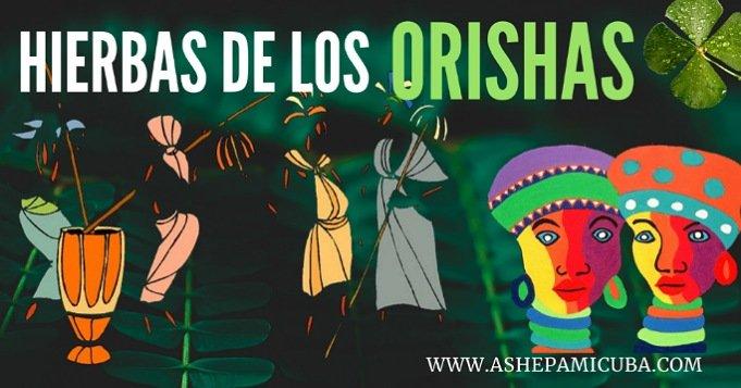 Hierbas de los Orishas