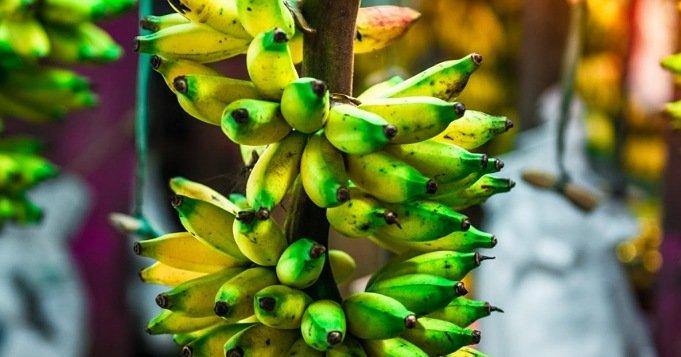 Plátanos en el cuarto de santo