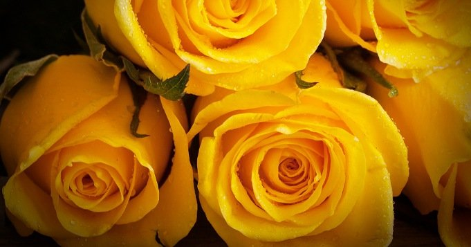 Baño de rosas amarillas