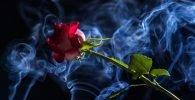 3 Inciensos de rosas para el amor