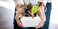 Plantas que alejan las malas energías