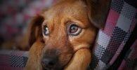 Oración para sanar a las mascotas