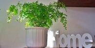 Plantas para la protección del hogar