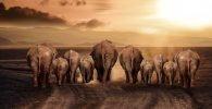Animales en la Religión Osha Ifá