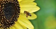 Tipos de miel de abeja