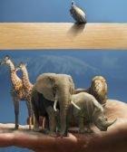 Animales yorubas