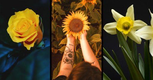 Flores amarillas significado espiritual