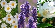 Flores para atraer el amor